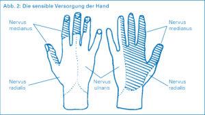 Karpaltunnelsyndrom - Nerven der Hand
